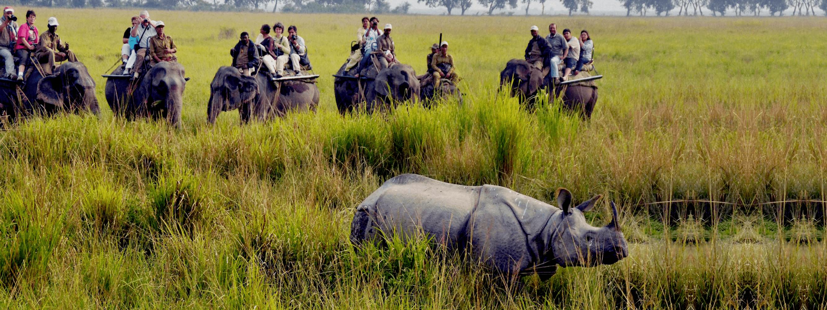 Assam on Wheels