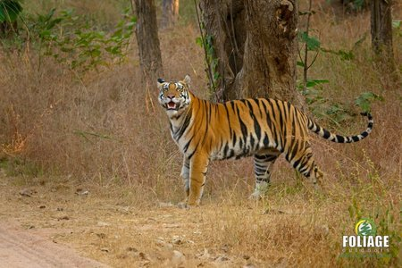 Panna Wildlife Camp (18-22 years)