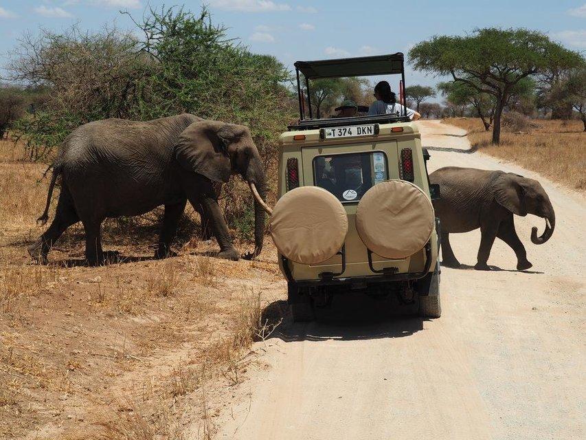 3-Day Serengeti and Ngorongoro Crater Safari from Mwanza to Arusha. - Tour