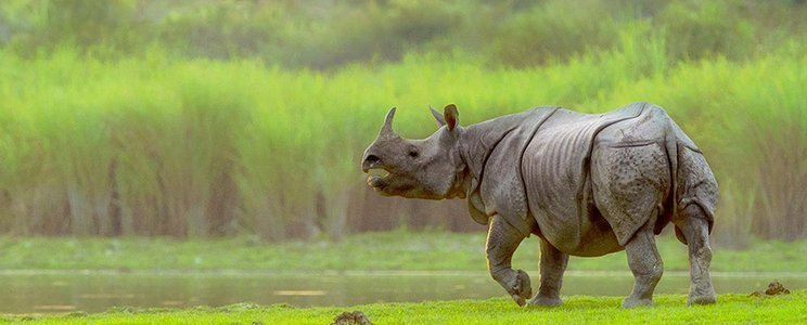Kaziranga National Park - Collection