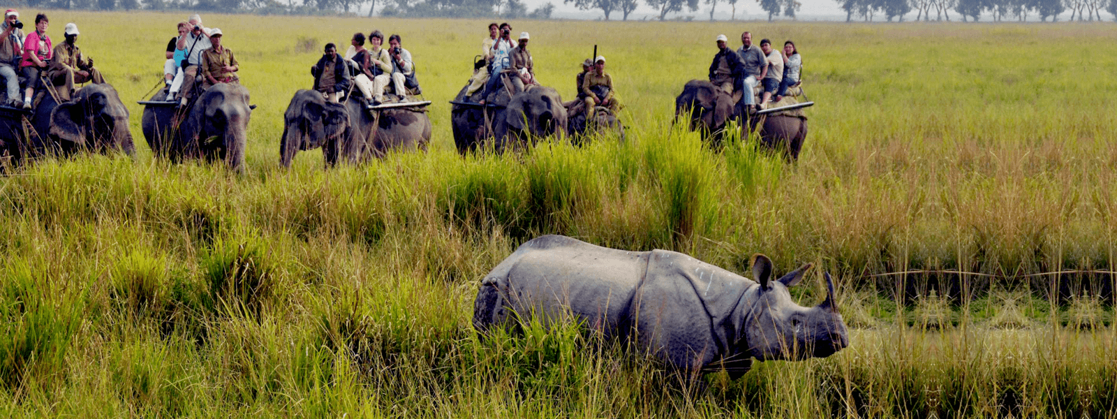 Guwahati Kaziranga National Park 2 nights 3 Days Taxi Tour - Tour