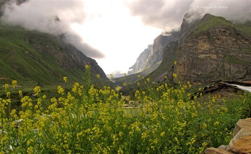 Valley of Flowers Trek (Ex Dehradun)