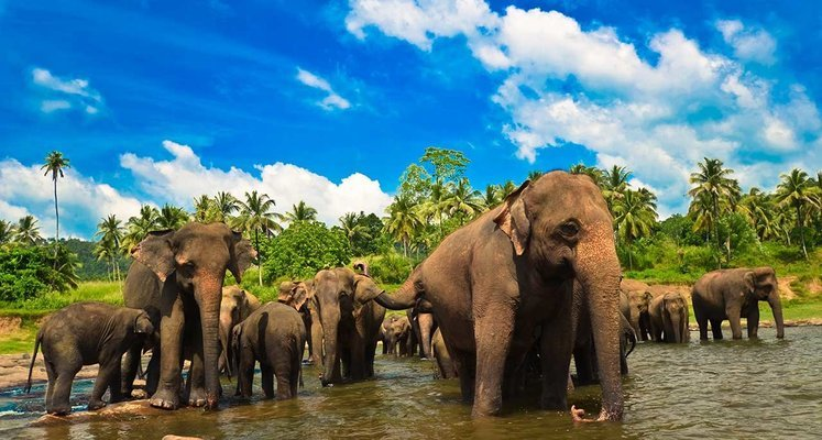 Sri Lanka Tour - Tour
