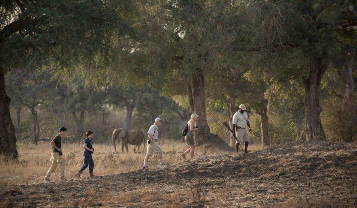 8 Days Mana Pools Walking Safari - Tour