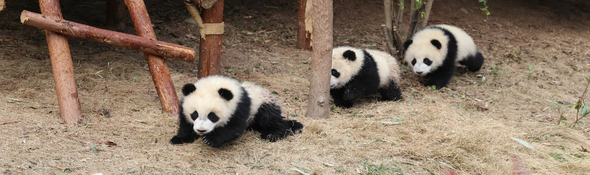 Chengdu Highlights Private Day Tour - Tour