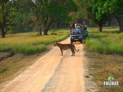 Kanha Wildlife Camp (Ex. Mumbai)
