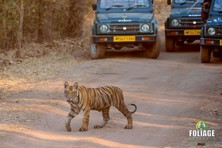 Bandhavgarh Wildlife Camp (Ex. Mumbai)