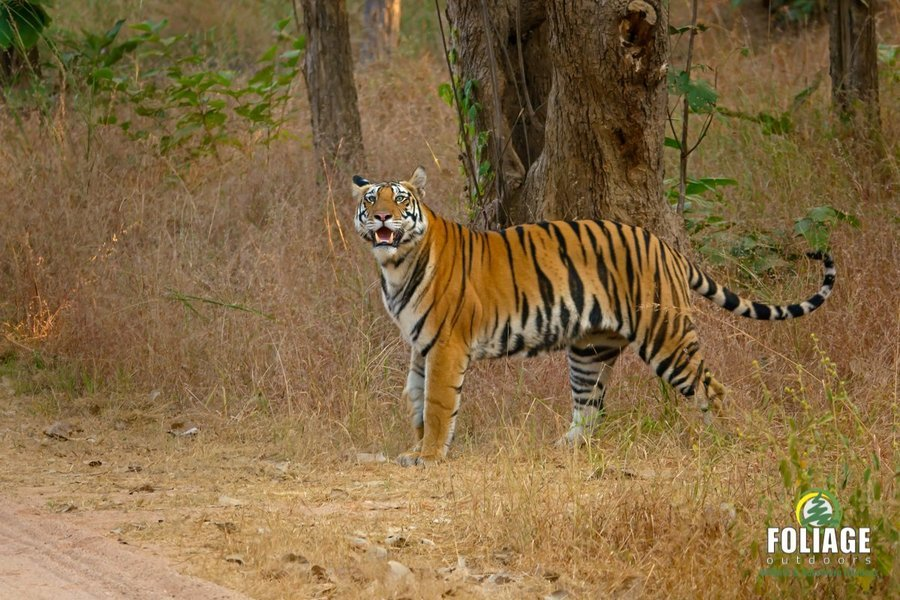 Panna Wildlife Camp (Ex. Mumbai) - Tour