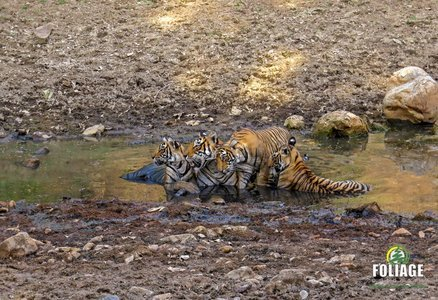 Ranthambhore Wildlife Camp (AC Train Travel - Ex. Mumbai)