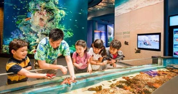 S.E.A. Aquarium VIP Tour Ticket, Singapore - Tour