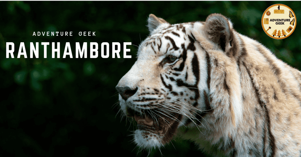 Exclusive Wildlife Photography at Ranthambore - Tour