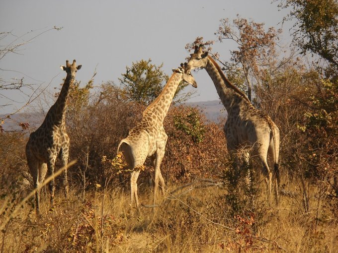 Game Drives in the Musiotunya National Park - Tour
