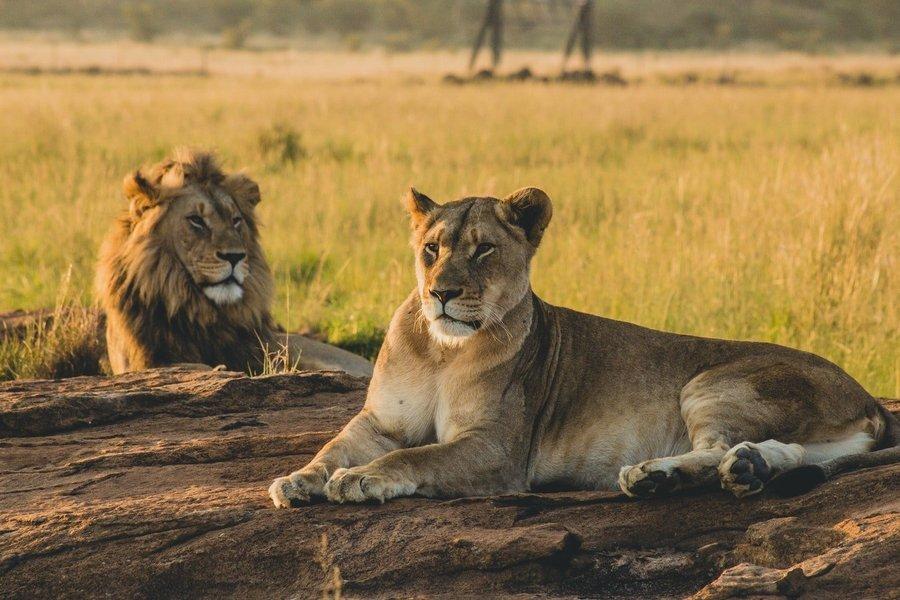 5-Day Serengeti Olduvai Gorge Ngorongoro and Tarangire Safari from Mwanza to Arusha - Tour