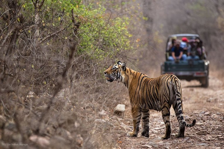Ranthambore Deluxe Package - Tour