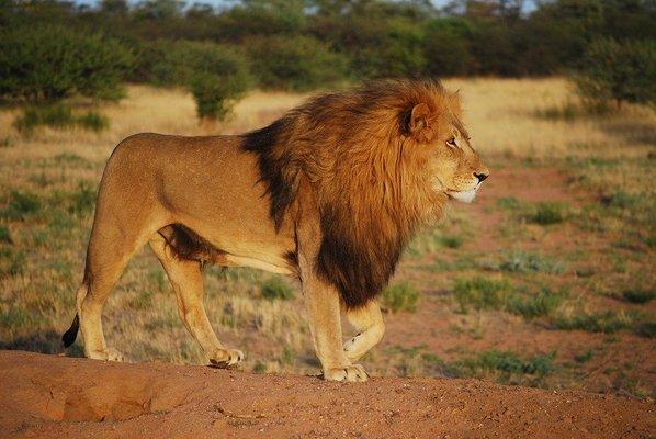 3-Day Serengeti Guided Safari from Mwanza - Tour