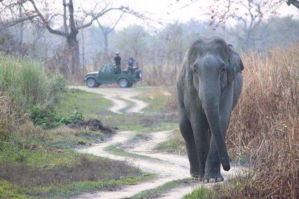Guwahati to Kaziranga National Park kohora or vise versa  one way transfer - Tour