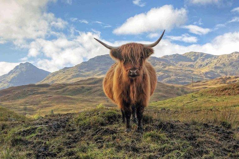 Loch Lomond National Park, Kelpies & Stirling Castle - Tour