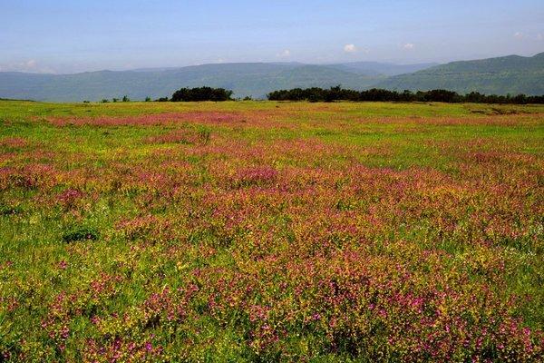 Tour to Kaas (Carpets of Wild Flowers) - Tour