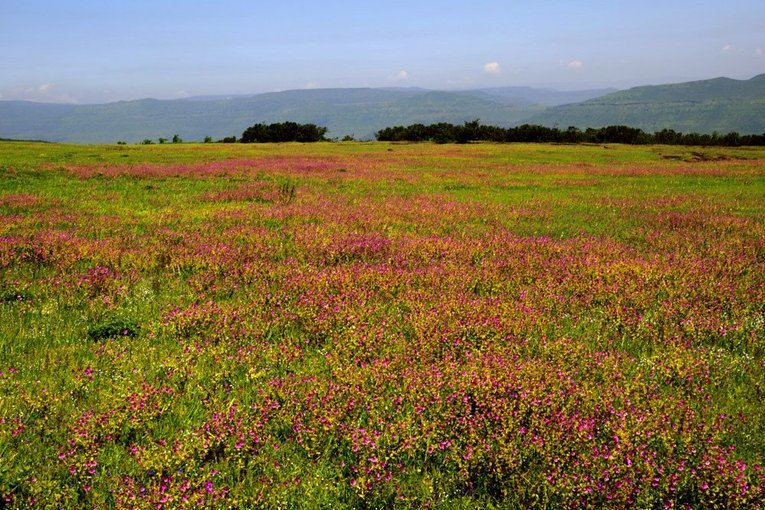 Tour to Kaas (Carpets of Wild Flowers) - Tour