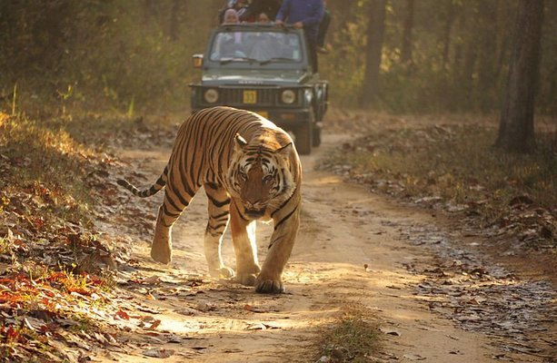 Kanha Tiger Safari - Tour