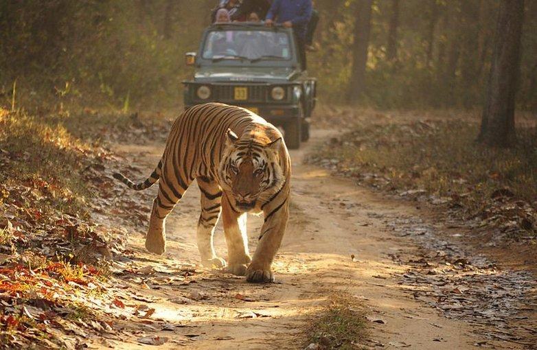 Kanha Tiger Safari - Tour