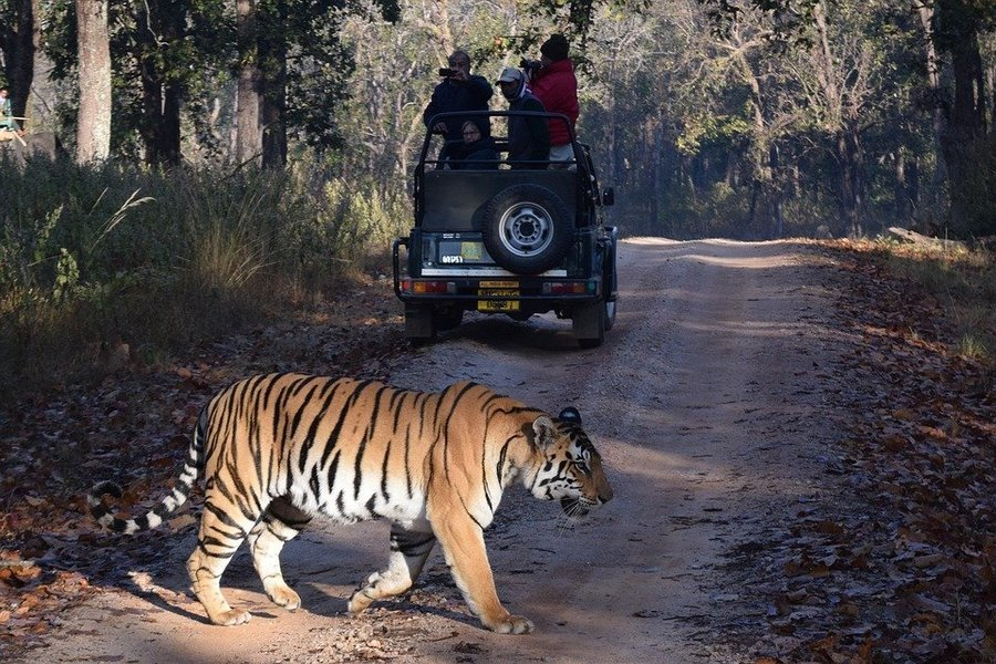 Pench Safari - Tour