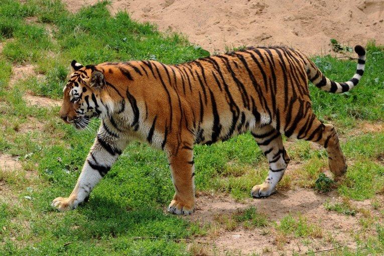 Umred Karhandla Wildlife Sanctuary - Tour