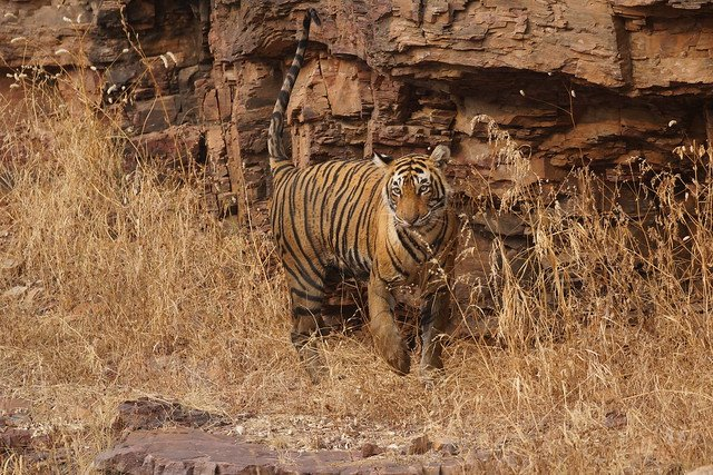 Bandhavgarh National Park Safari - Tour