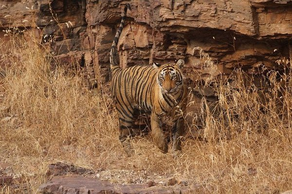 Bandhavgarh National Park Safari - Tour