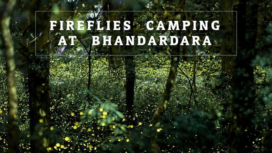 Fireflies Special Camping at Bhandardara - Tour