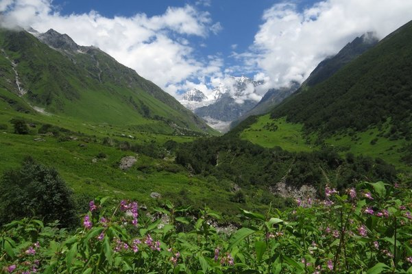 Valley of Flowers Trek (Ex Dehradun) - Tour