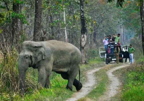 Guwahati Kaziranga National Park 2 Days Taxi Tour - Tour