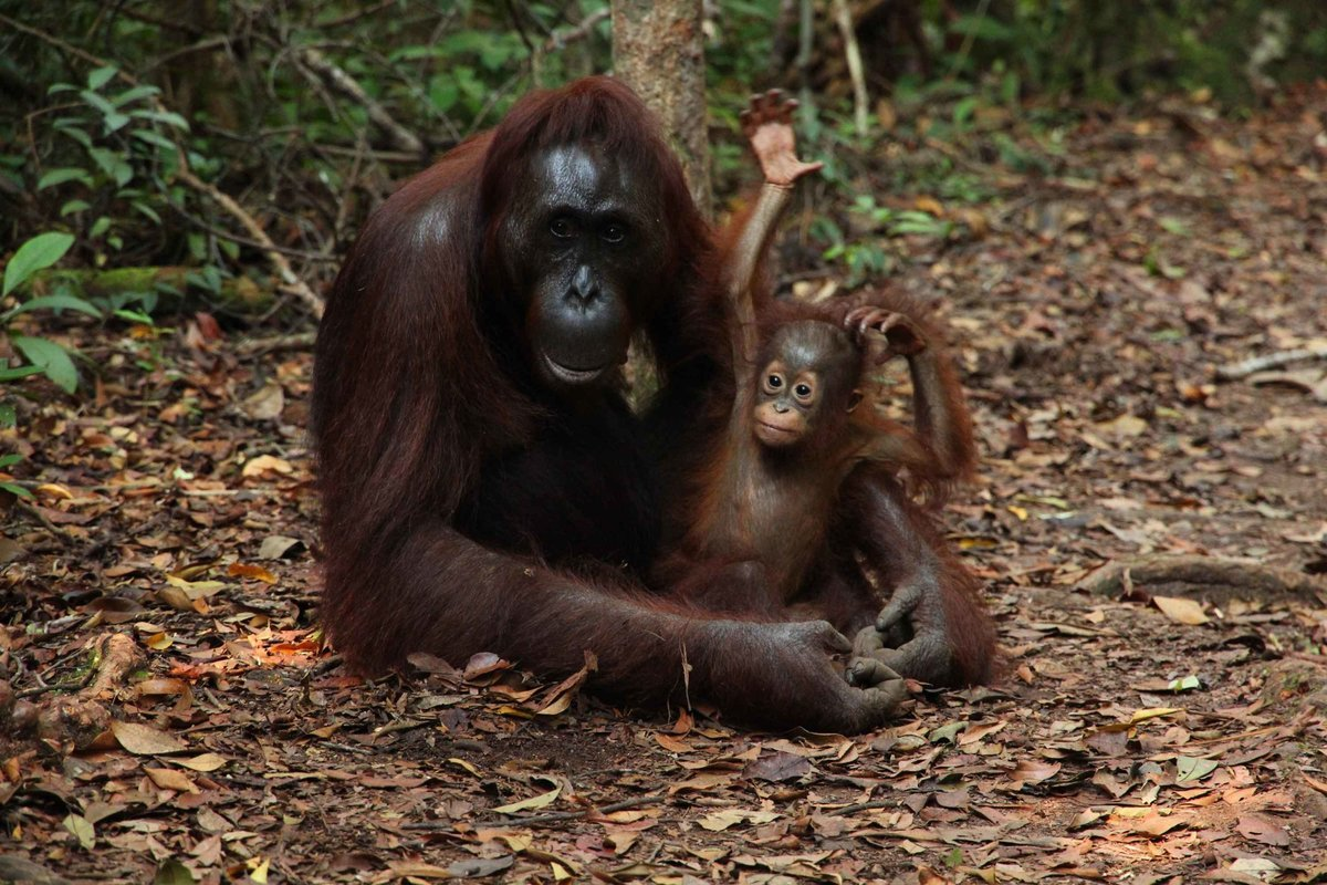 Nature & Wildlife Tours in Asia - Collection