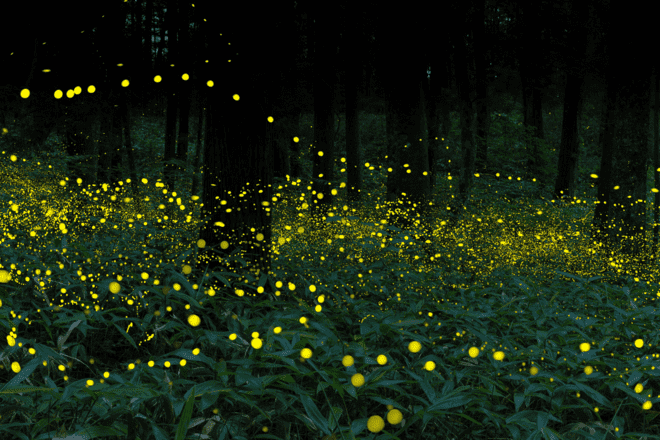 Fireflies Festival - Collection