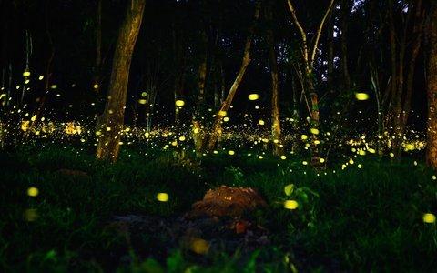 Prabalmachi Fireflies Night Trek and Camping 2020