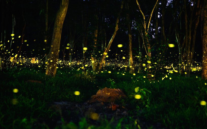 Prabalmachi Fireflies Night Trek and Camping 2020 - Tour