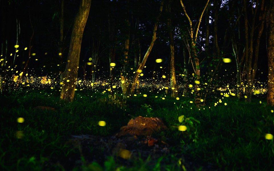 Prabalmachi Fireflies Night Trek and Camping 2020 - Tour