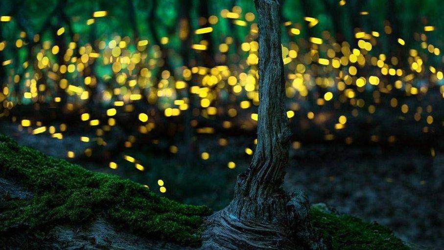 Rajmachi Fireflies Special Camping - Tour