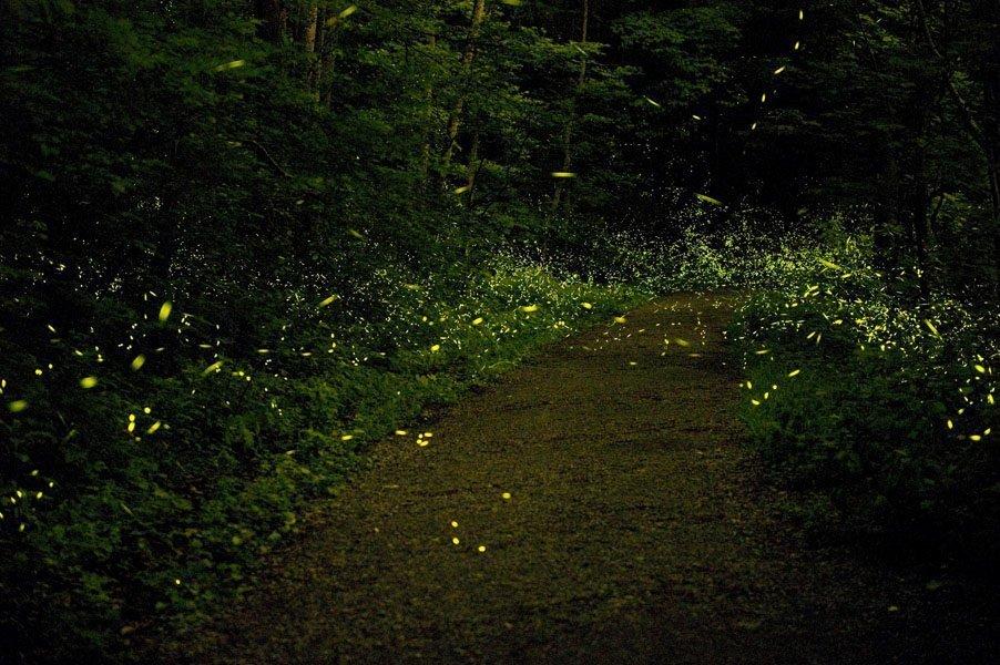 Rajmachi Fireflies Trek 2019 | Fireflies near Mumbai Pune - Tour
