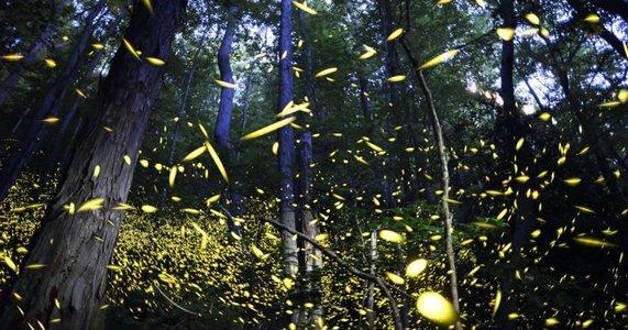 Bhandardara Fireflies Special Camping