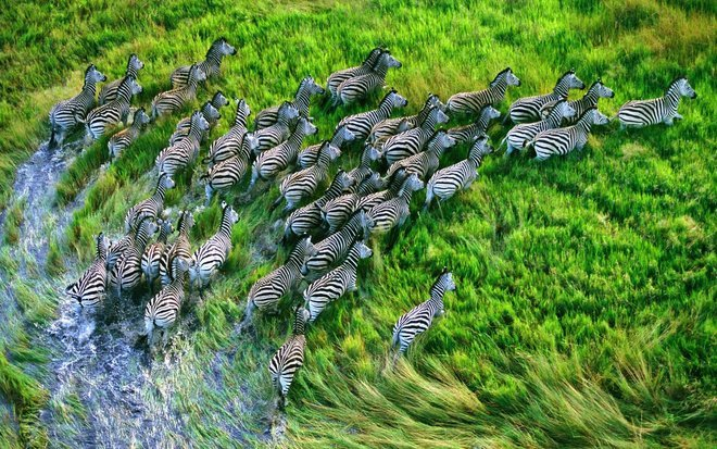 Birding and The Great Migration Safari - Collection