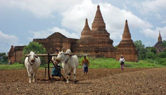 Myanmar Cultural Adventures - Collection