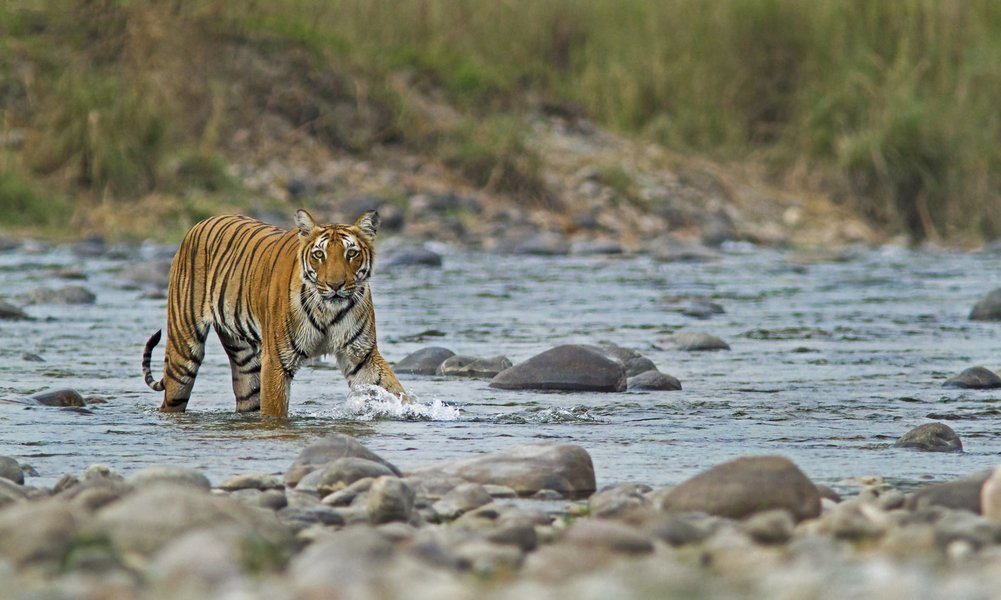 Jaipur Ranthambhore Holiday - Tour