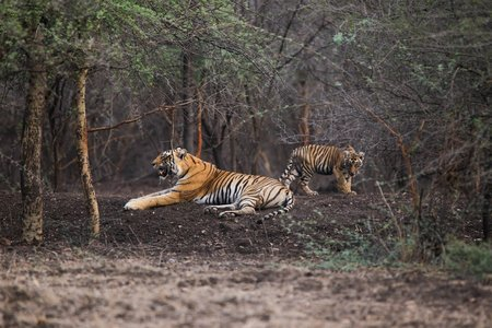 Ranthambhore National Park and Jhalana