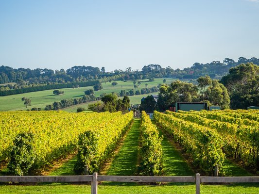 Private Wine Tours from Melbourne - Tour