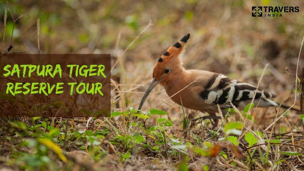 X-Mas special tour to Satpura National Park - Tour