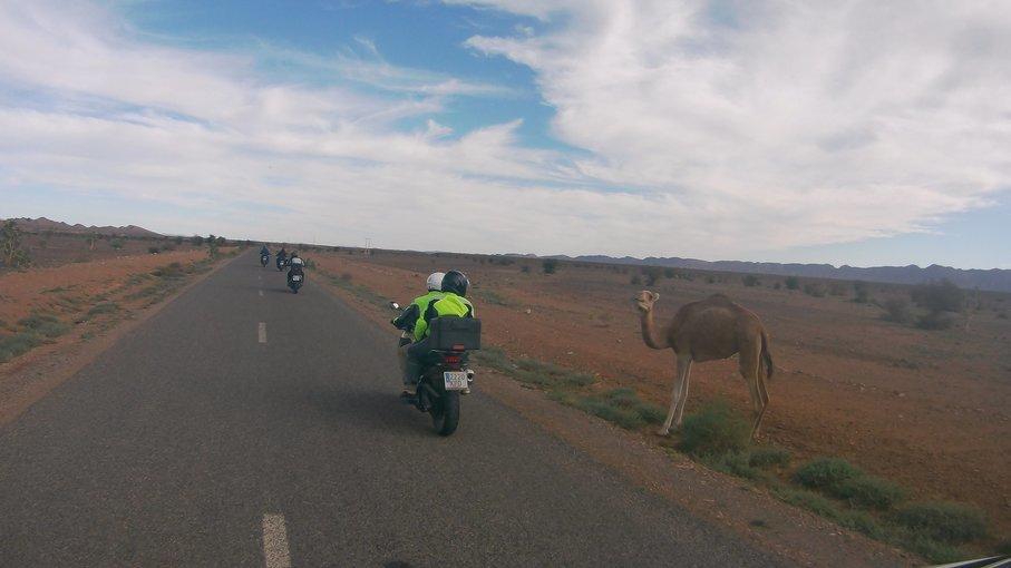 The Morocco Sensation - Tour