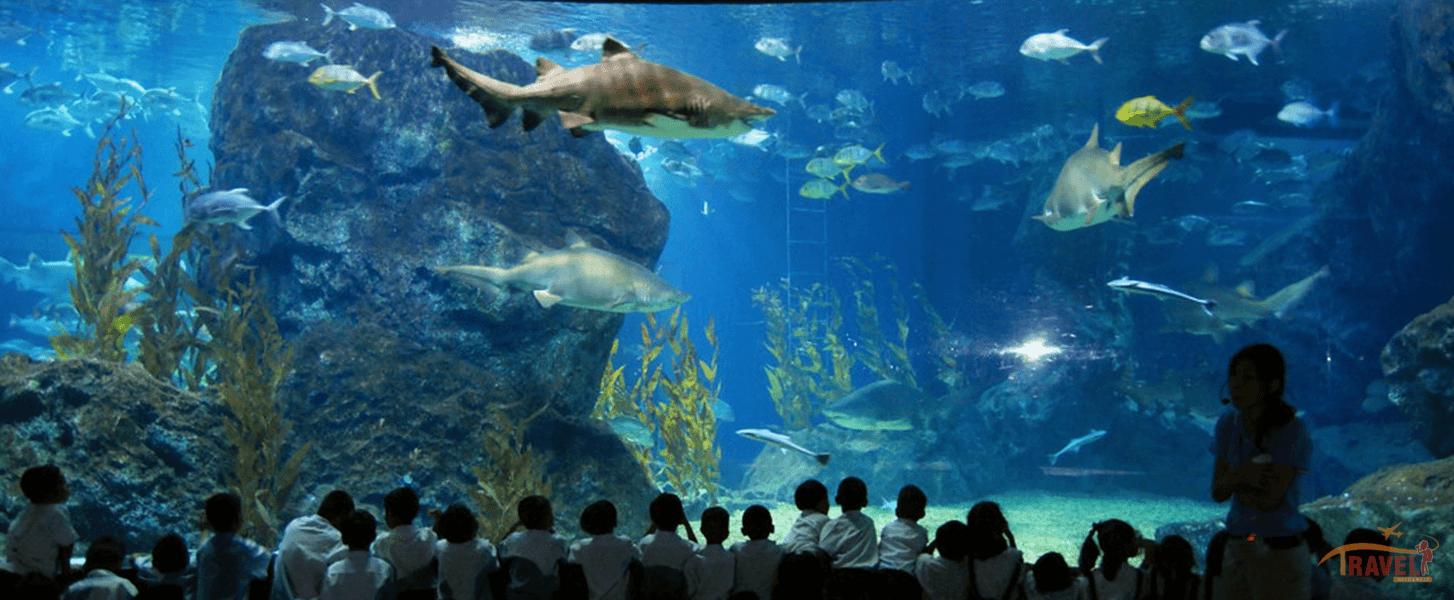 SEA LIFE Bangkok Ocean World - Tour
