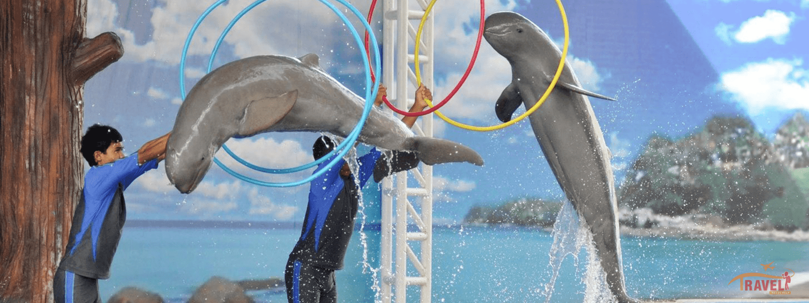 Pattaya Dolphin Show with transfer (Half Day) - Tour