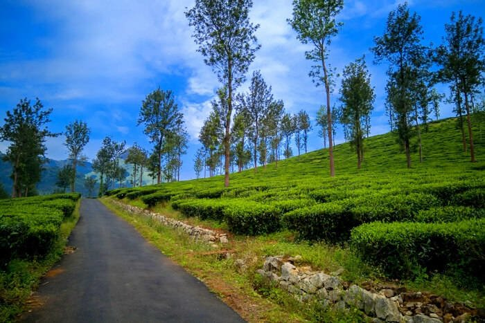 Explore Wayanad on a Day Tour - Tour